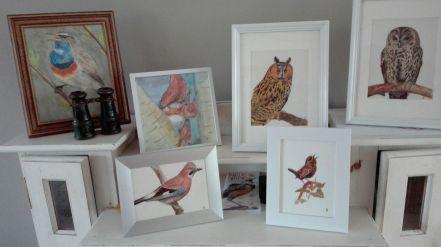 2016-06-08 - Vogeltjes voor Westhoffhuis
