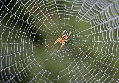 Wielwebspin - myscienceschool.org