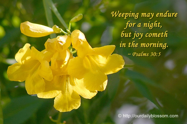 Psalm 30 6 - Weeping may endure for a night - Our Daily Blossom