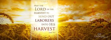 Lukas 10 2 - Pray the Lord of the harvest - Pinterest